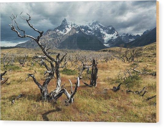 Wood Print featuring the photograph Ghost Trees Of Patagonia by Stuart Gordon