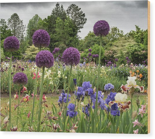 Giant Allium Guards Wood Print