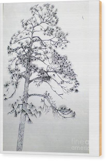 Giant Silver Pine Tree Wood Print by Hal Newhouser