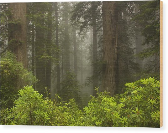 Giants In The Mist Wood Print