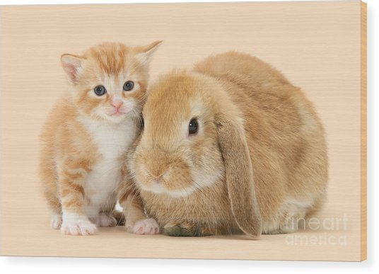 Ginger Kitten And Sandy Bunny Wood Print