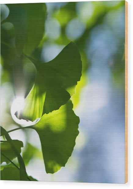 Gingko Leaves In The Sun Wood Print