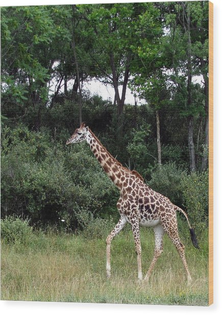 Giraffe 2 Wood Print by George Jones