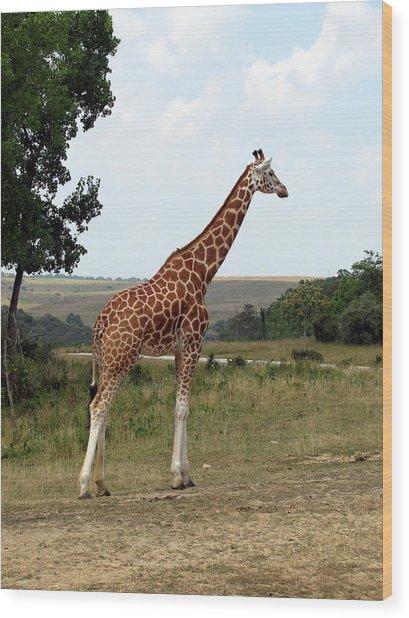 Giraffe 3 Wood Print by George Jones