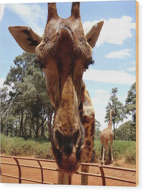 Giraffe Getting Personal 6 Wood Print