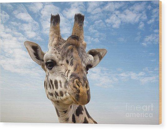Giraffe In The Masai Mara Wood Print