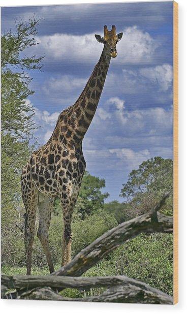 Giraffe Wood Print by Mario De Matos