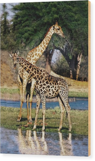 Giraffe Mother And Calf Wood Print