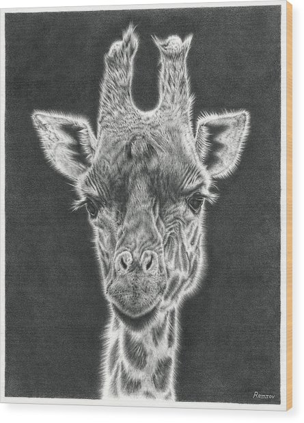 Giraffe Pencil Drawing Wood Print