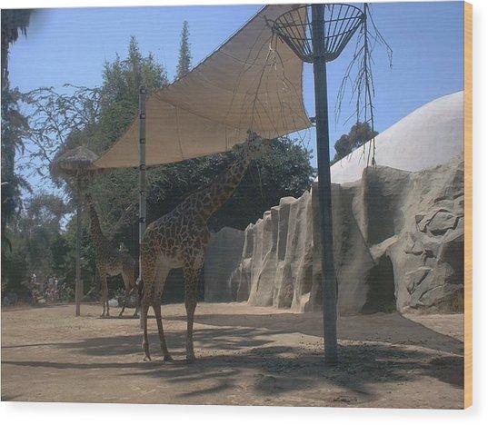 Giraffes Wood Print by Guillermo Mason