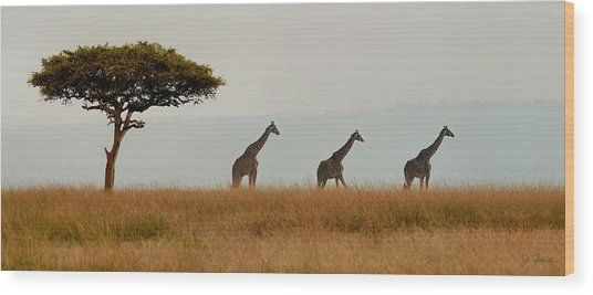 Giraffes On Parade Wood Print