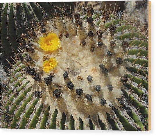 Giving Birth Barrel Cactus Yellow Flowers Wood Print