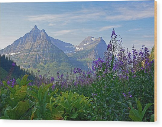 Glacier National Park Fireweed Wood Print