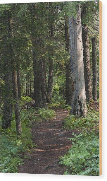 Glacier National Park Woodland Trail Wood Print