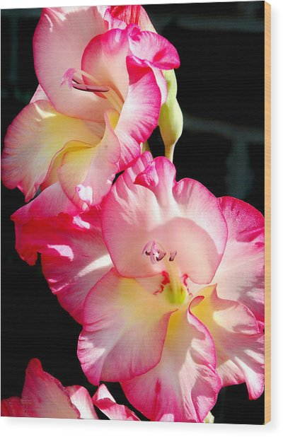 Gladiolas Wood Print by Tony Ramos