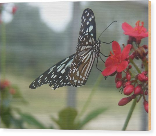 Glass Wing Butterfly Wood Print by James and Vickie Rankin