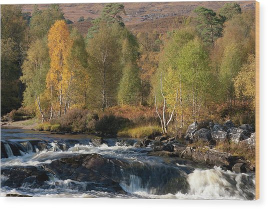 Wood Print featuring the photograph Glen Affric In Autumn by Karen Van Der Zijden