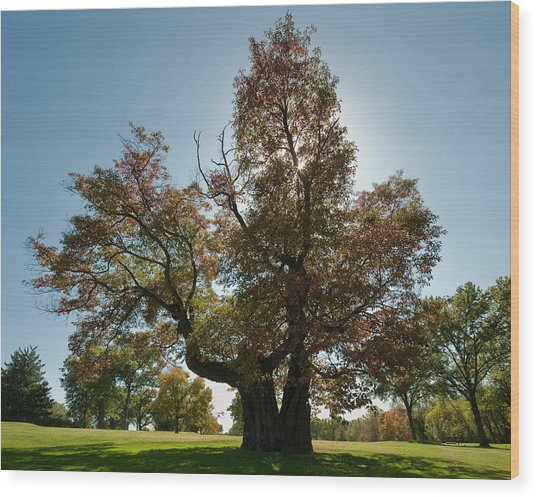 Glen Echo Country Club Logo Tree Wood Print
