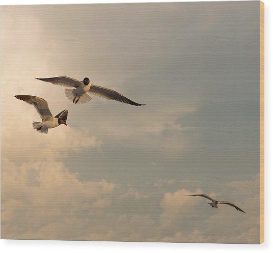 Gliders Wood Print