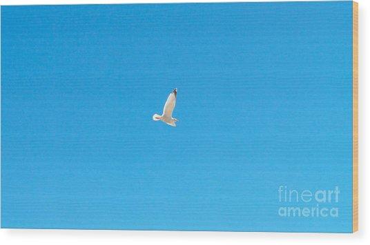 Gliding Seagull Wood Print