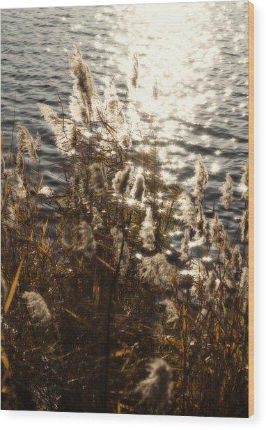Glisten Wood Print by Ariane Moshayedi