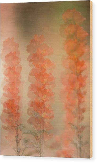 Globe Mallow Impressions Wood Print