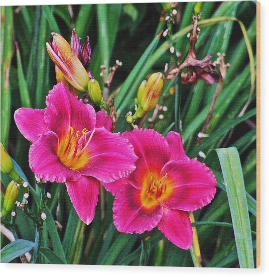 Glorious Daylilies Wood Print
