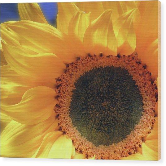 Glorious Sunflower Wood Print