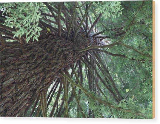 Glorious Tree  Wood Print