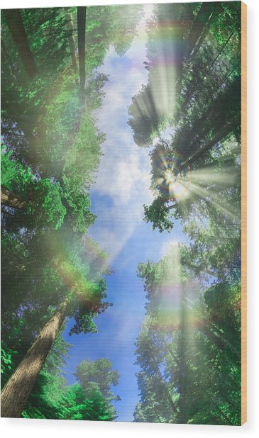 Glory Amongst Redwoods Wood Print