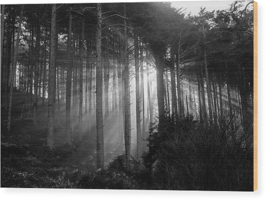 Glory Of Morning Wood Print