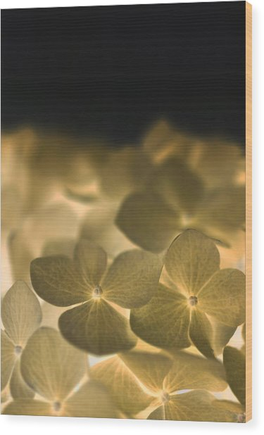 Glow Blossoms Wood Print