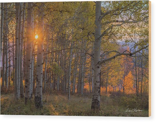 Glowing Aspen, La Sal Mountains Wood Print