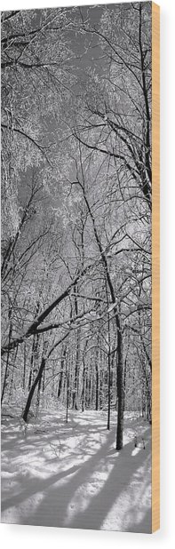 Glowing Forest, Knoch Knolls Park, Naperville Il Wood Print
