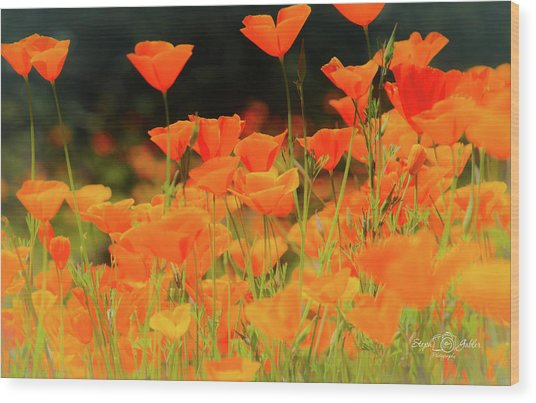 Glowing Poppies Wood Print