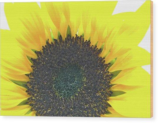 Glowing Sunflower Wood Print