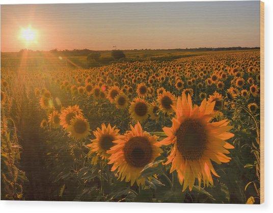 Glowing Sunflowers Wood Print