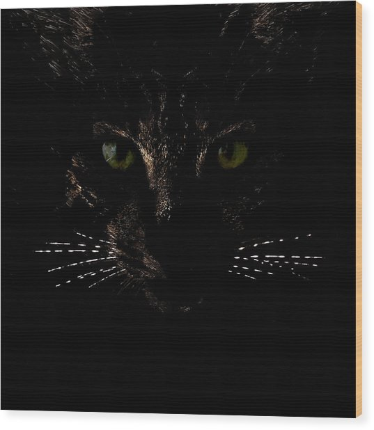 Wood Print featuring the photograph Glowing Whiskers by Helga Novelli