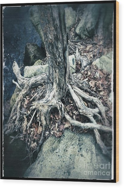 Gnarled Rooted Beauty Wood Print