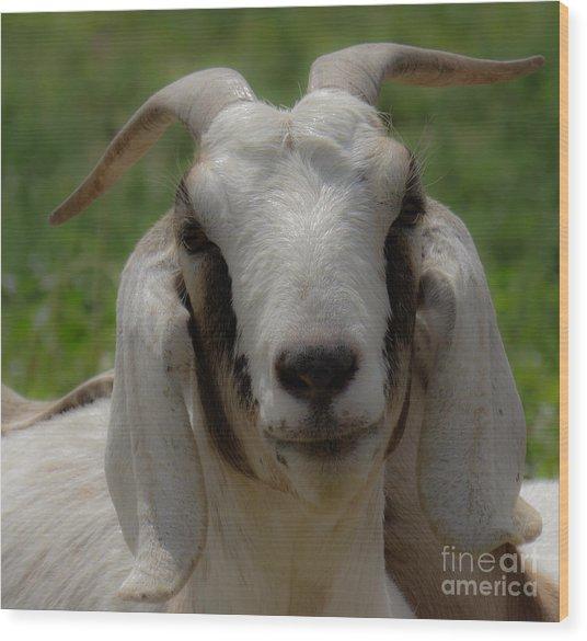 Goat 1 Wood Print