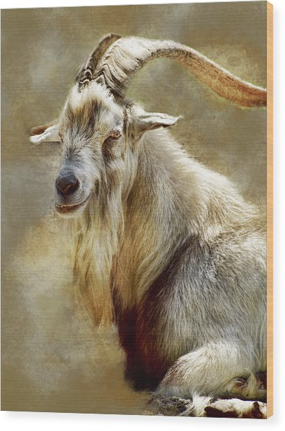 Goat Portrait Wood Print