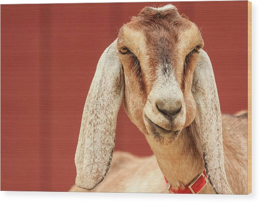 Goat With An Attitude Wood Print