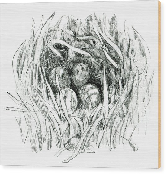 Godwit Nest Wood Print