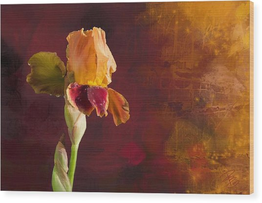Gold And Red Iris Wood Print