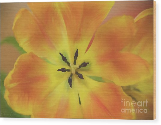 Gold Tulip Explosion Wood Print