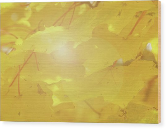 Golden Autumn Leaves Wood Print