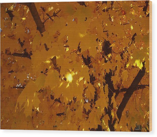 Golden Autumn Wood Print by Stephen Davis