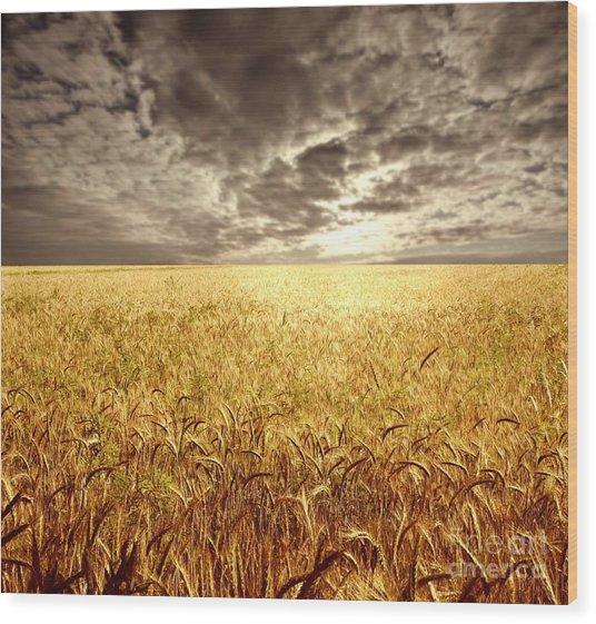 Golden Beautiful Wheat Farm Wood Print