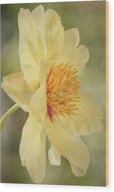 Golden Bowl Tree Peony Bloom - Profile Wood Print