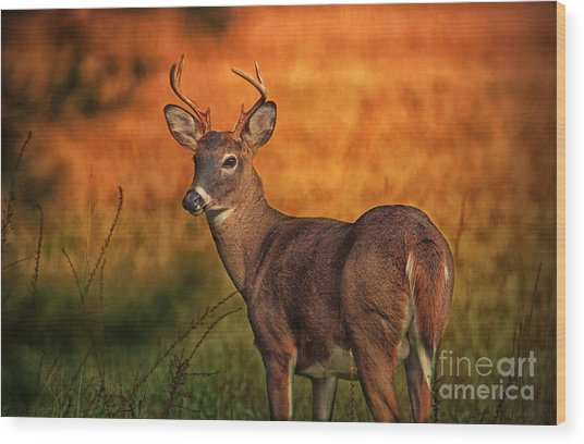 Golden Buck Wood Print